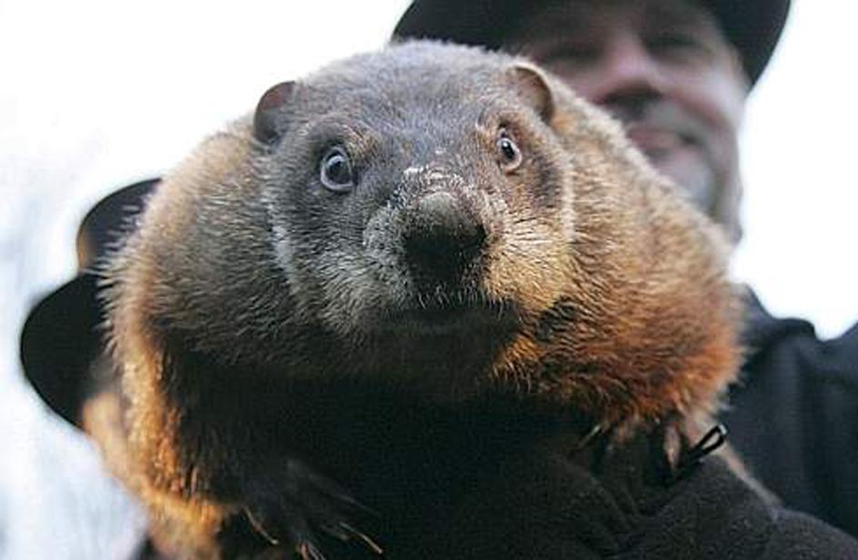 È il giorno della marmotta, e prevede primavera