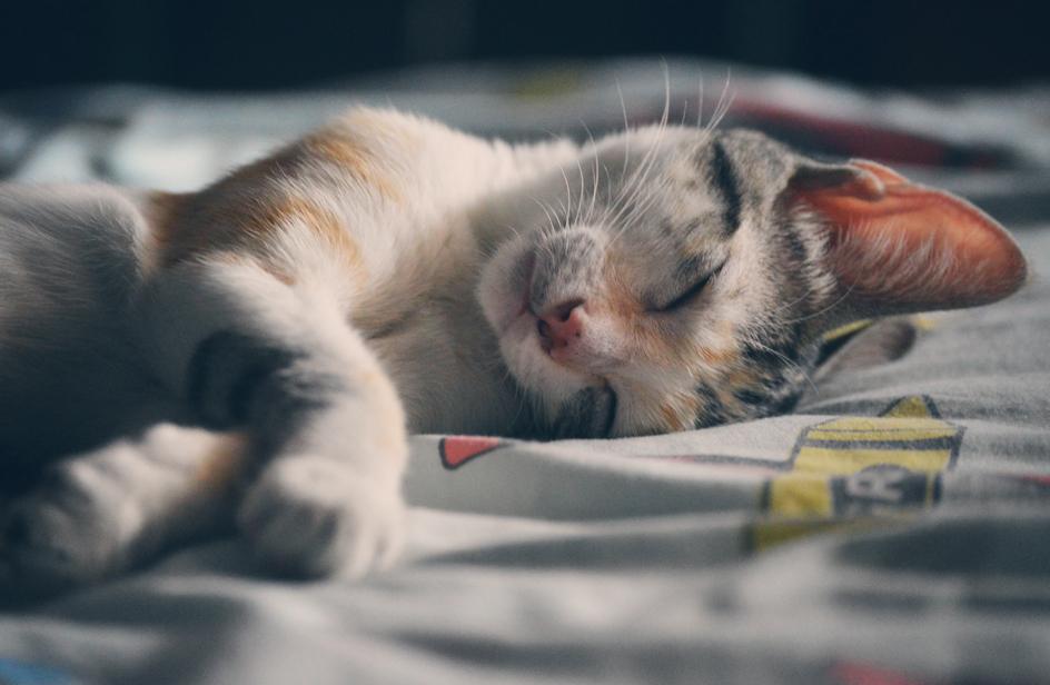 gatti prevenzione malattie - rds loves pets