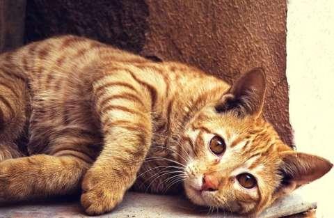 Il linguaggio dei gatti