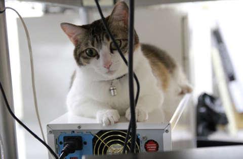 9 gatti assunti da un'azienda giapponese