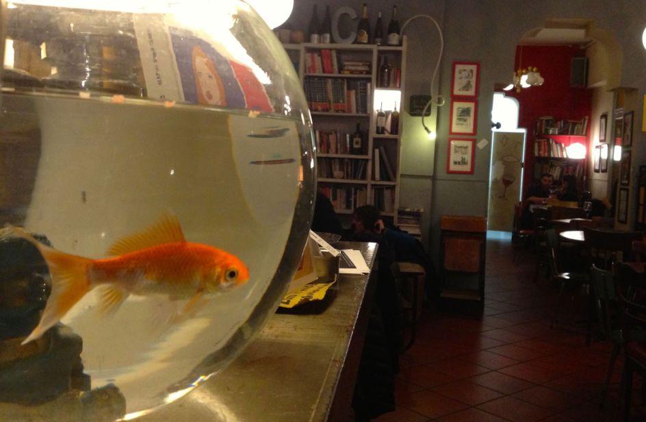 Il pesce rosso nella boccia maltrattato arriva la for Quanto vive un pesce rosso