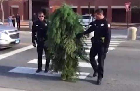 Agenti arrestano un albero