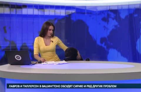 Irruzione durante il Tg in Russia: ad irrompere un simpatico labrador