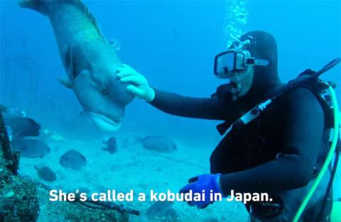 Un'amicizia che dura da trent'anni tra un pesce e un sub