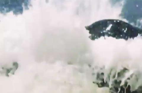 Megattera spunta dall'acqua e rischia di rovesciare una barca